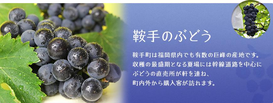 鞍手のぶどう 鞍手町は福岡県内でも有数の巨峰の産地です。収穫の最盛期となる夏場には幹線道路を中心にぶどうの直売所が軒を連ね、県内外から購入客が訪れます。